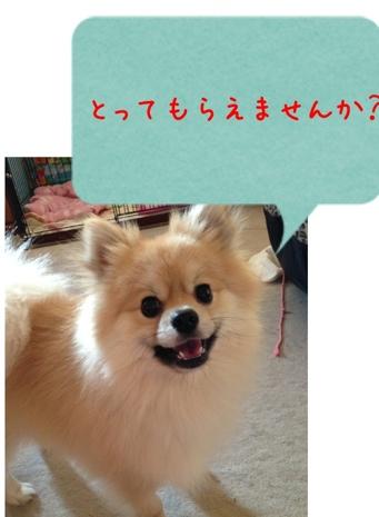 fc2blog_2013051616114483b.jpg