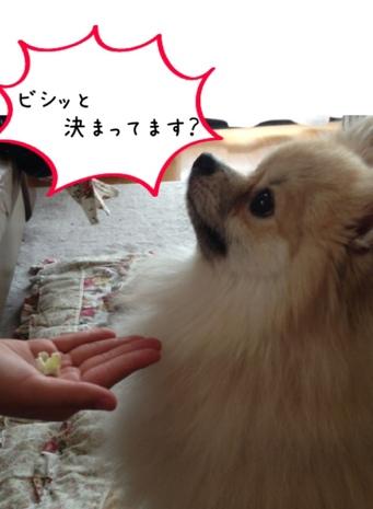 fc2blog_201305291629290cd.jpg