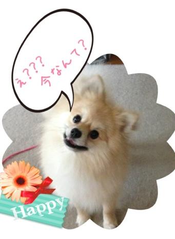 fc2blog_20130530091856e80.jpg