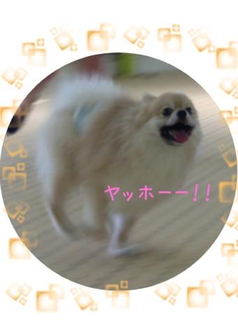 fc2blog_20130603173237054.jpg