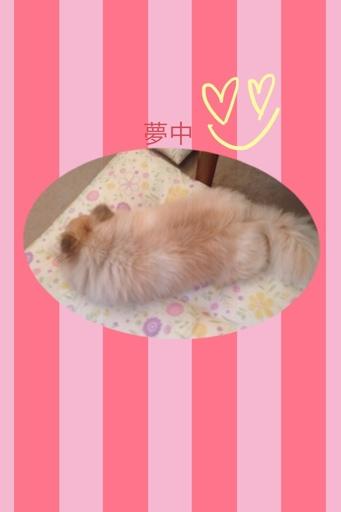 fc2blog_20130627180849e6b.jpg