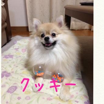 fc2blog_20130913214606c52.jpg