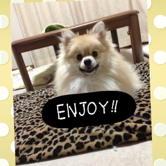 fc2blog_2013092411071612e.jpg