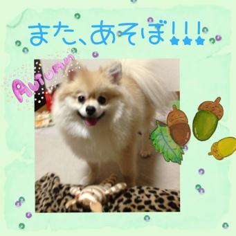 fc2blog_20131105160846a85.jpg