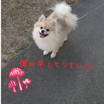 fc2blog_201311172123186a4.jpg