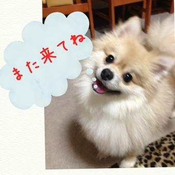 fc2blog_20131122222858fc4.jpg
