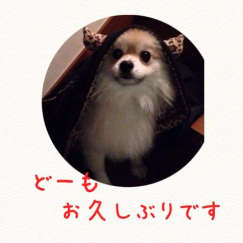 fc2blog_201411111449471c8.jpg