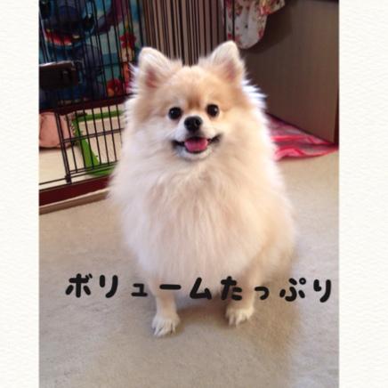 fc2blog_20141112183553515.jpg