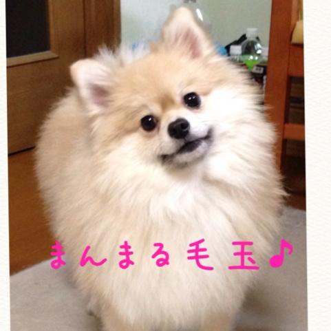 fc2blog_20141112183740185.jpg