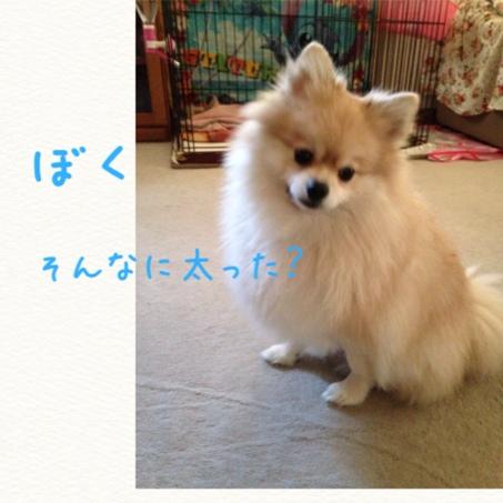 fc2blog_20141116221526d70.jpg