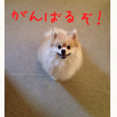 fc2blog_201411162222573c4.jpg