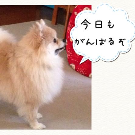 fc2blog_20141119224222f30.jpg