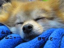 //blog-imgs-58-origin.fc2.com/p/o/m/pomepino/20130506111937aae.jpg