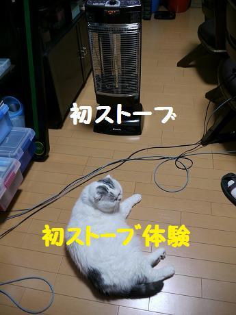 P1310777.jpg