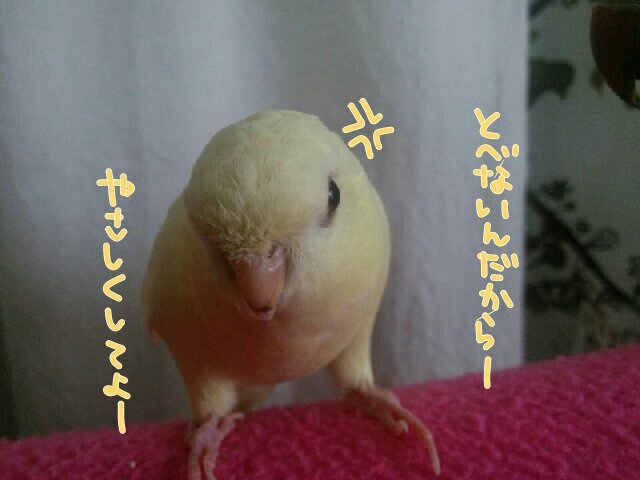 201412012256093f9.jpg