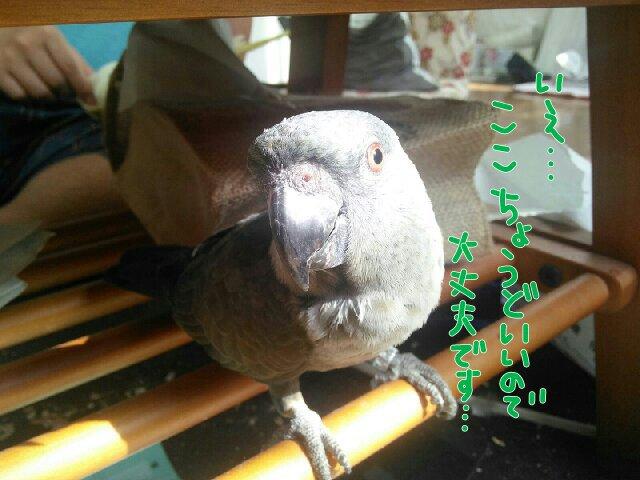 PicsPlay_1411864783774.jpg