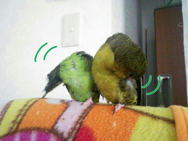 PicsPlay_1413722752681.jpg