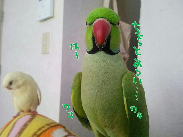 PicsPlay_1414648738572.jpg