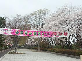 華蔵寺横断幕20130401