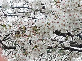 華蔵寺アップ20130401