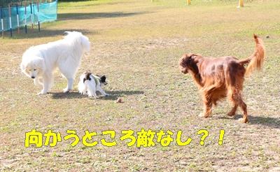 IMG_7122-crop.jpg