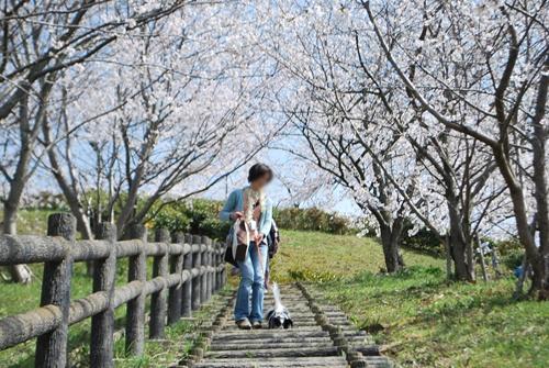 桜のトンネルの階段2