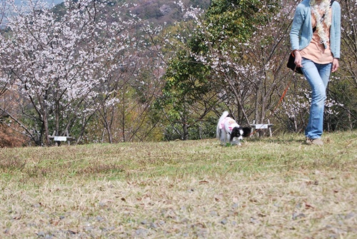 百合山広場をルビーとお散歩