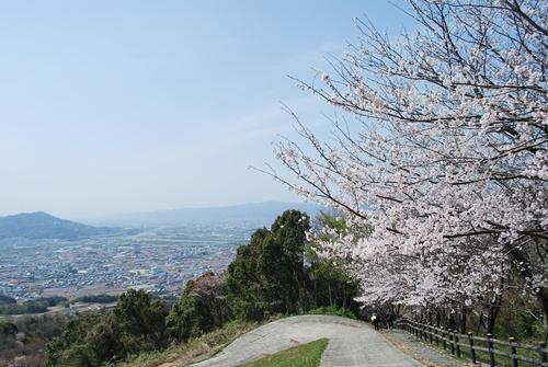 桜と紀ノ川平野、紀ノ川、桃源郷のコラボ
