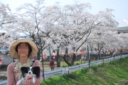 宇陀川沿い水分の桜ルビー抱っこ