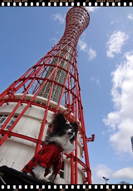ポートタワーとマリィちゃん