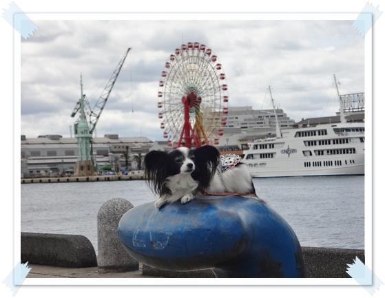 港で撮影ルビー