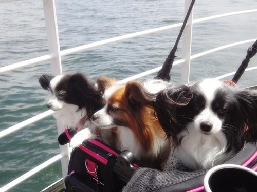 船 ルビー、倫ちゃん、連君