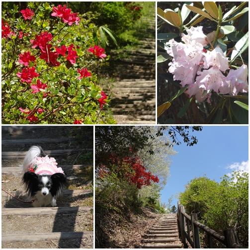 花を見ながら階段を上ります