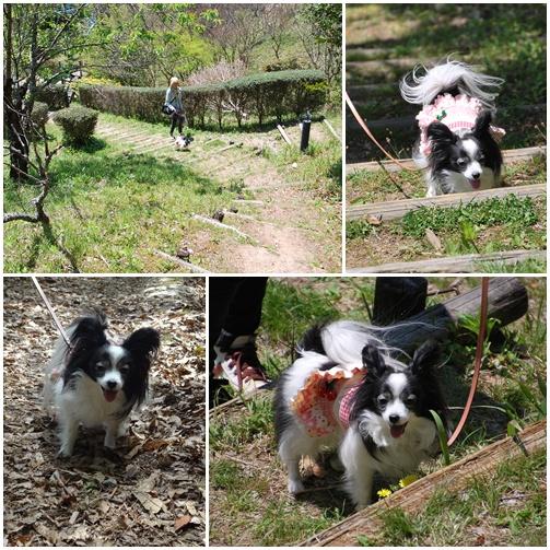不思木の森公園で笑顔のルビー