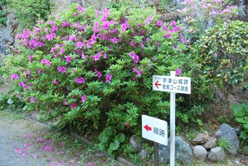 宇津山城跡散策コース矢印