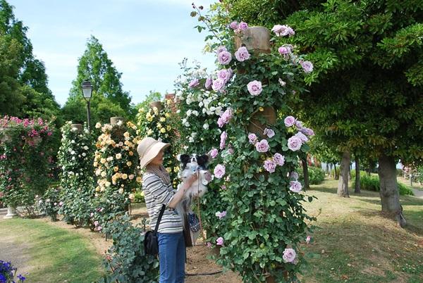 パープル系のバラとのコラボママにだっこで