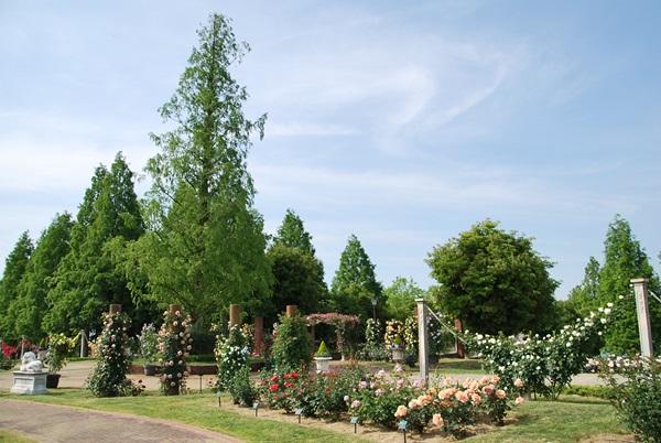 バラ園の景色1