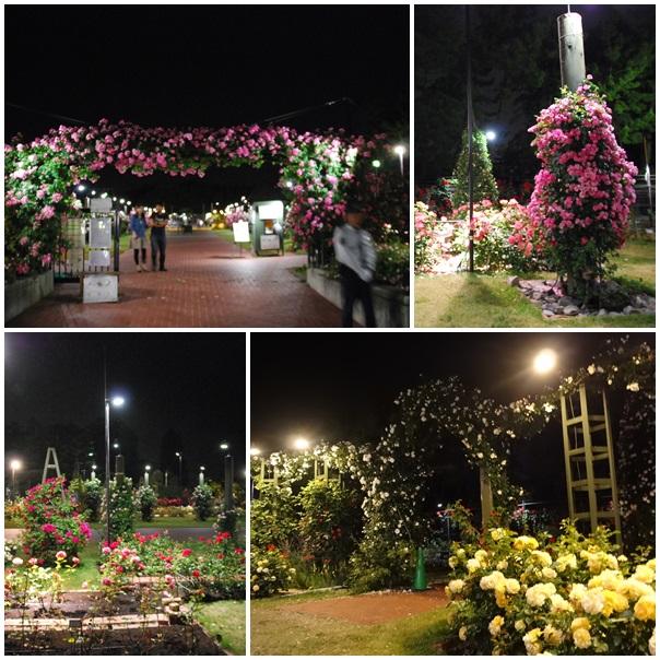 ばら庭園2