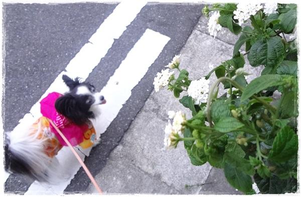 白いお花と
