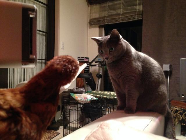 猫と対面02