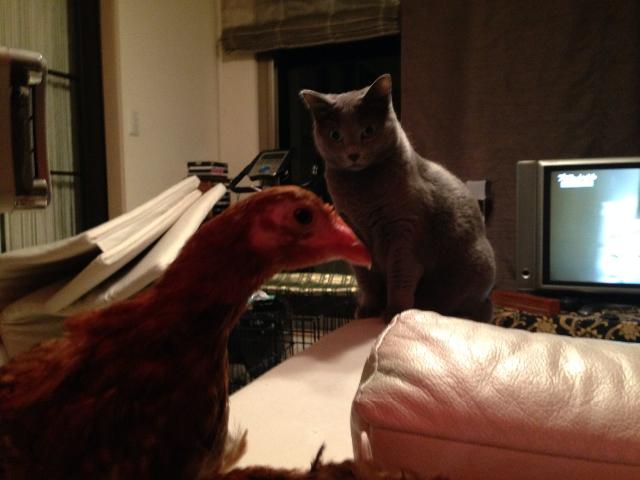 猫と対面03