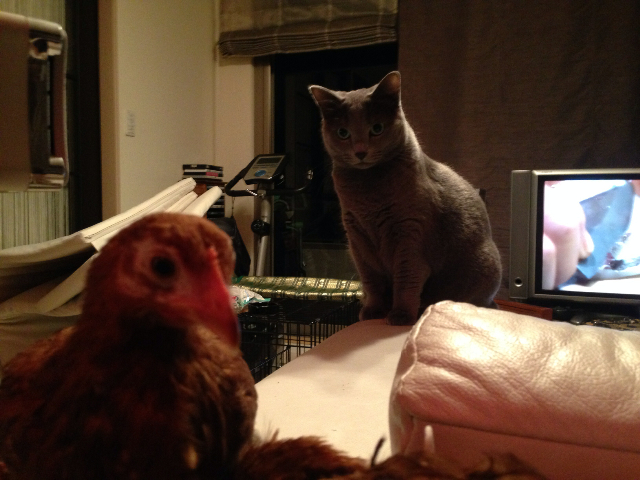 猫と対面04