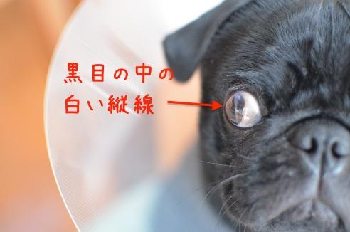 黒目の中の白い縦線