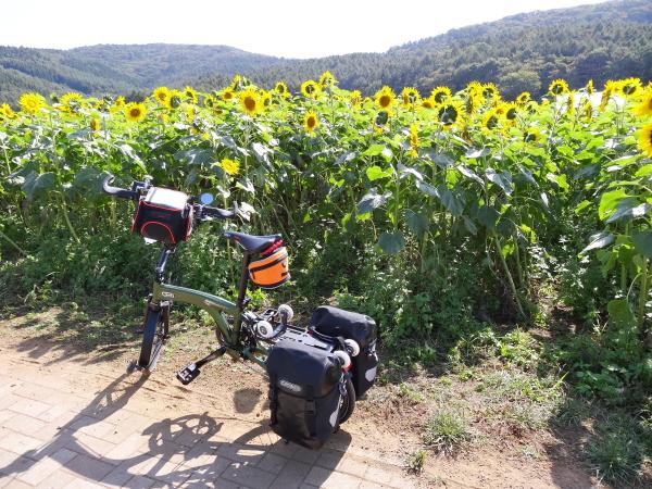 131014_10オリバイク M10現像