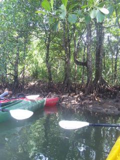 カヤックで西表島のジャングルへ 2
