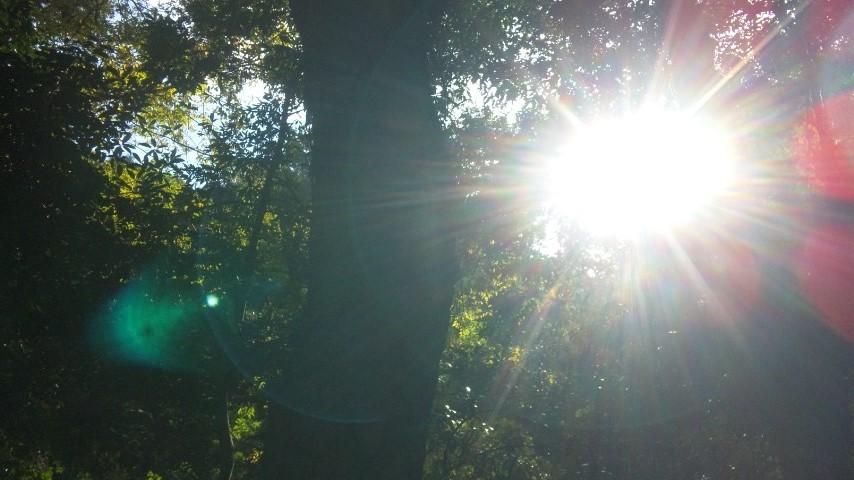 ミーママが見た森と太陽