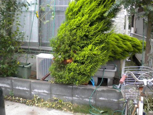 20130916_植木倒れる