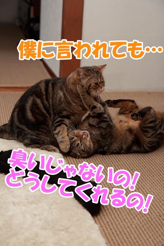6_20130426181432.jpg