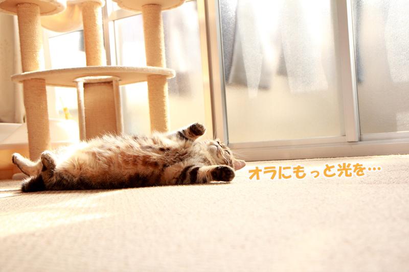 IMG_3790.jpg
