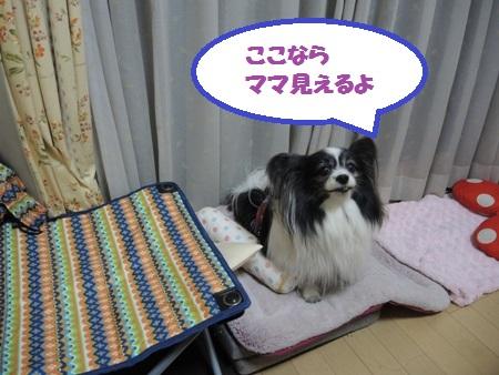 DSCN4207.jpg